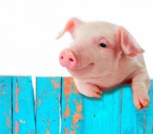 Новый год, Новый год 2019, год свиньи, новая лета, свинья